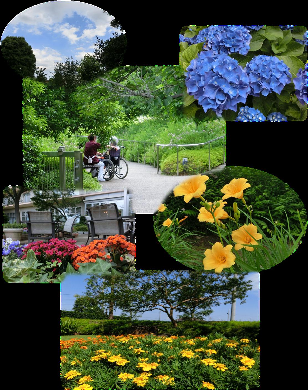 庭園の様子「初夏」.png